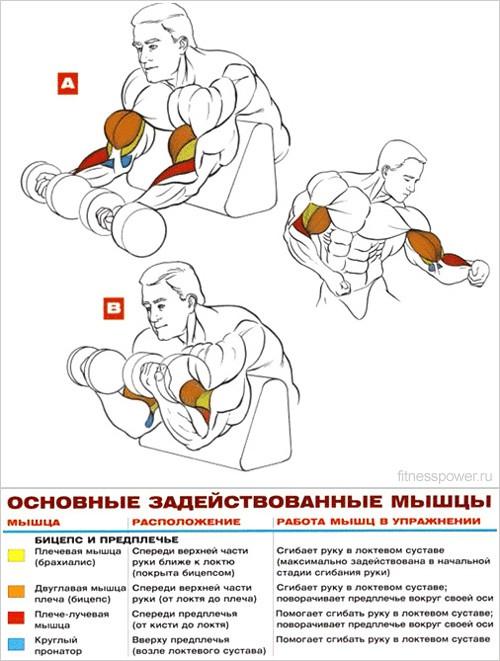 Упражнения бицепс домашние условия