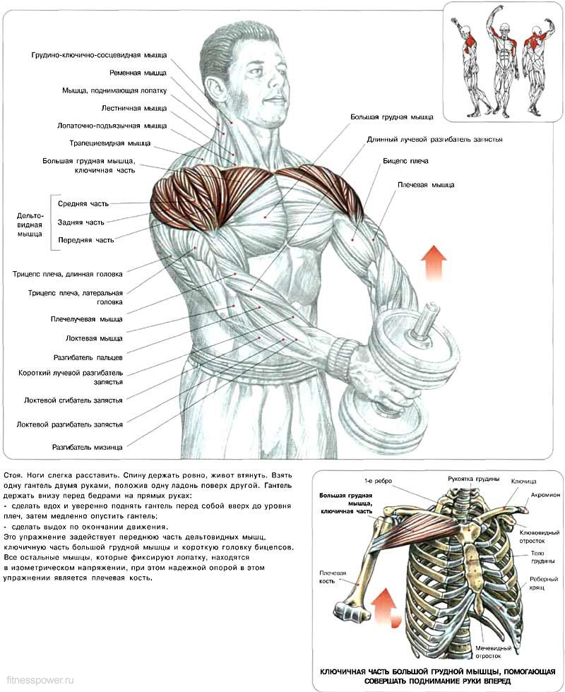 Как накачать мышцы с одной гантелей в домашних условиях
