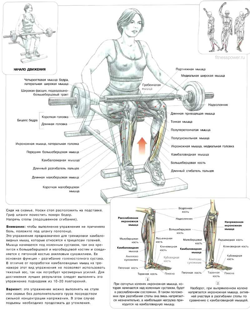 Упражнения для увеличения икроножных мышц в домашних условиях