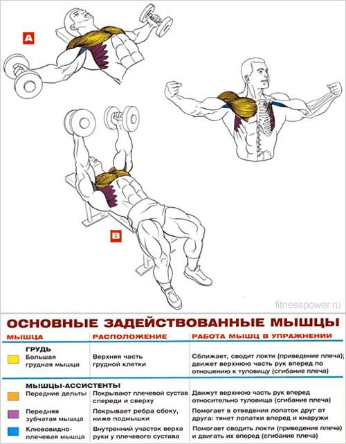 Упражнения на грудную мышцу для мужчин в