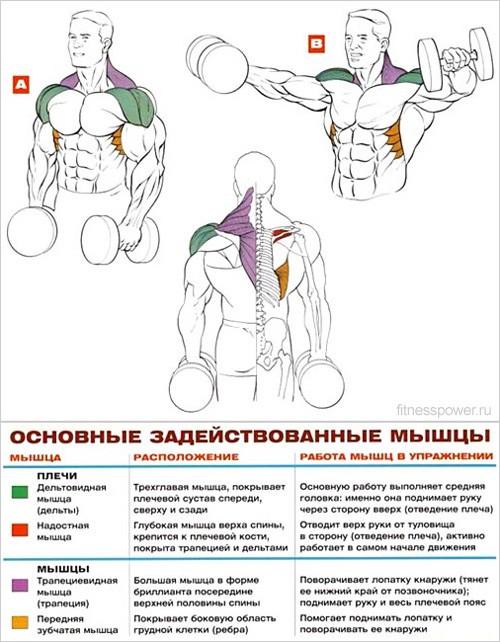 Какие упражнения в домашних условиях на плечи