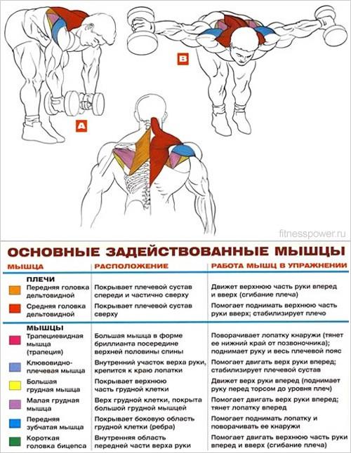 Упражнения для рельефа мышц в домашних условия 54