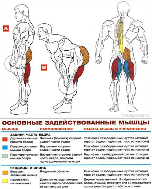 Как накачать мышцы ног для девушек в домашних условиях