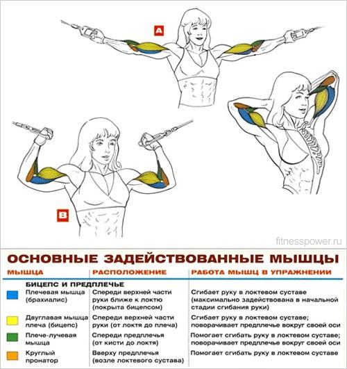 Как в домашних условия накачать мышцы рук девушке