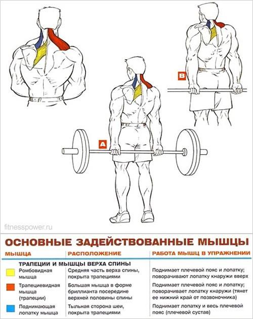 Упражнения накачать спину в домашних условиях