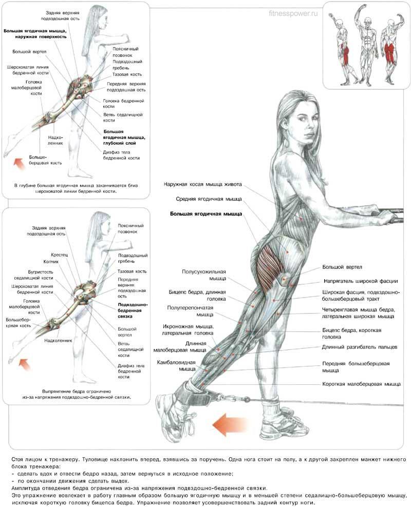 Упражнения для мышц ног в картинках