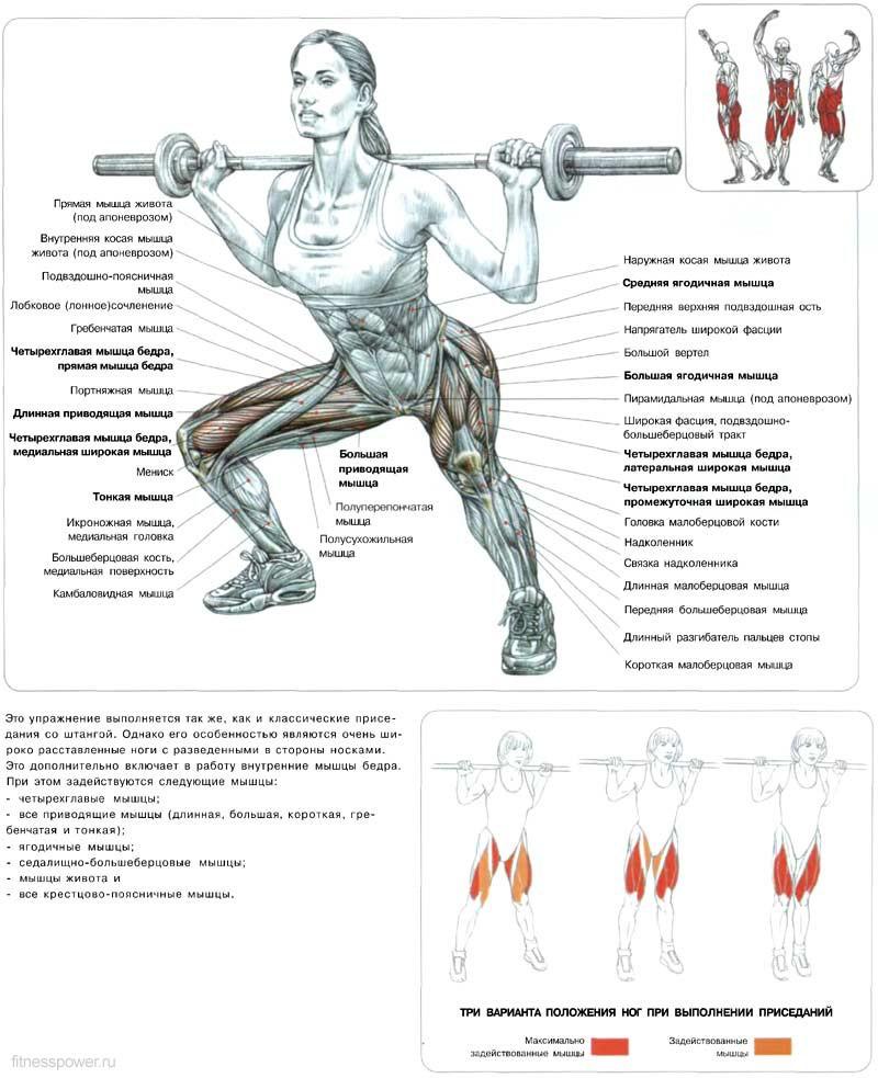 упражнения для мышц ног в картинках играете стереотипную